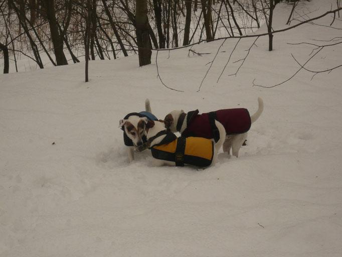 Lotta nella Neve  1