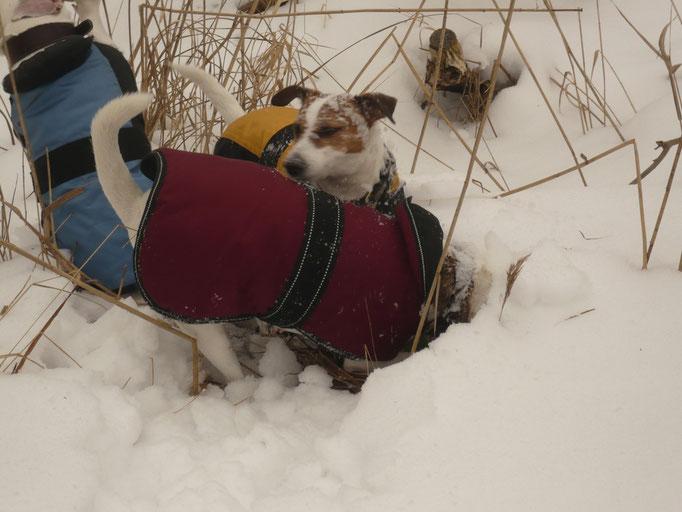 Lotta nella Neve 2