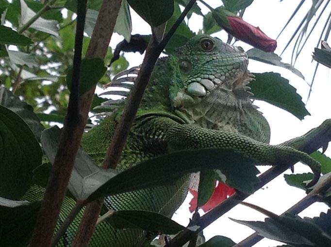 Birdwatching Panama