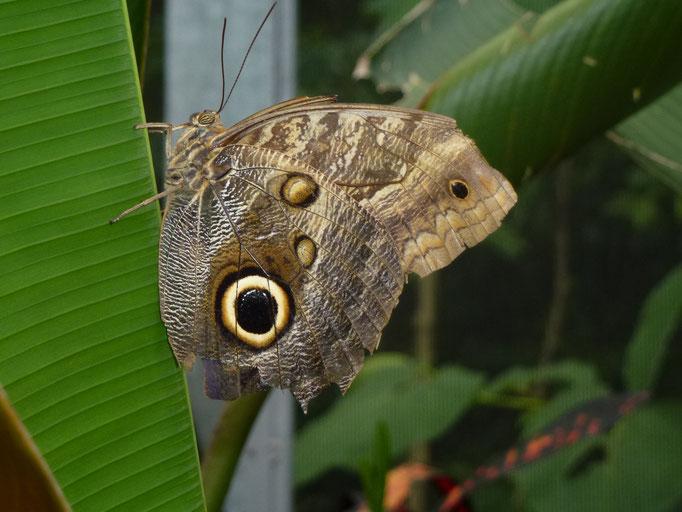 Organisation Cours de photo nature  Panama Cabanas los Colibris