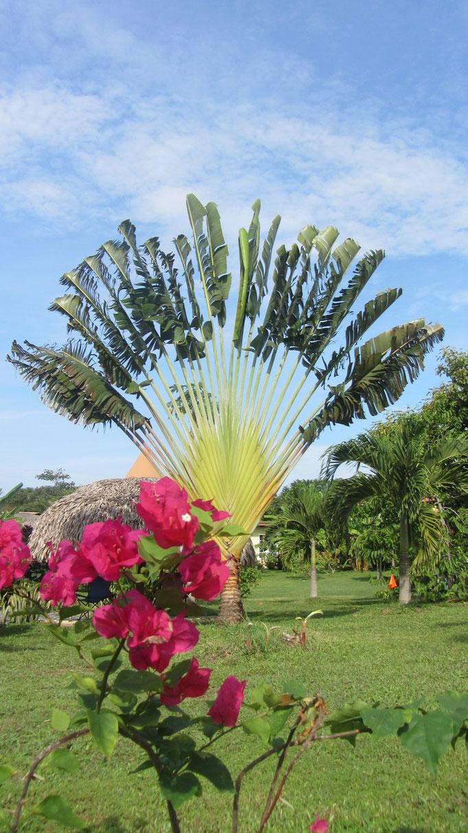 Magnifique végétation du Panama