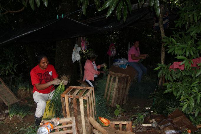Visite Guidée Panama