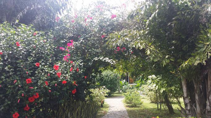 végétation panama