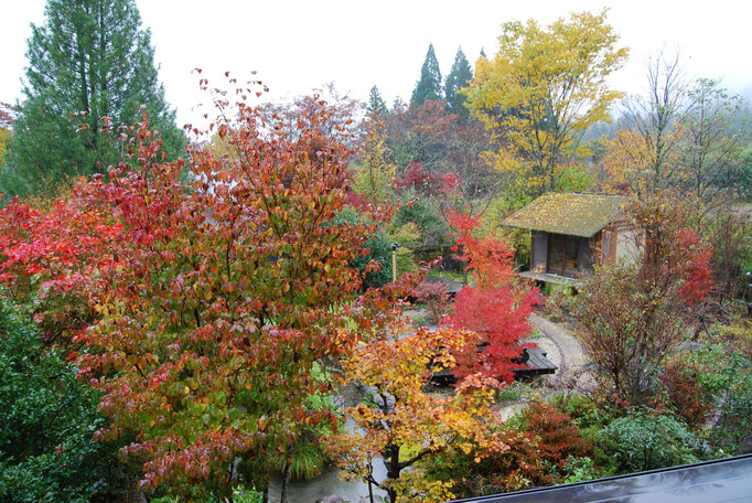 秋 秋の紅葉 紅葉10月中旬~11月中旬