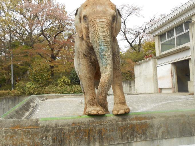 桐生が岡動物園 イズミちゃん 炎と楽園のアート ちょっと一息