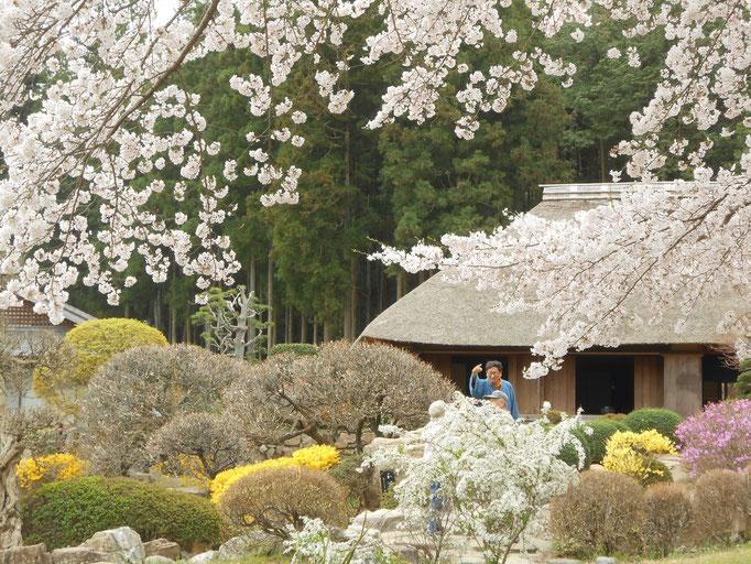 細川紙紙漉き家 春の桜 あおい夢工房 炎と楽園のアート