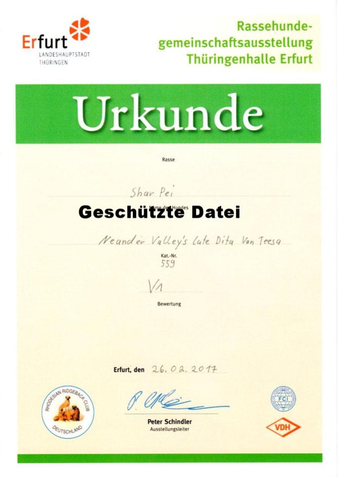 Urkunde Erfurt VDH-Rassehundegemeinschaftsausstellung