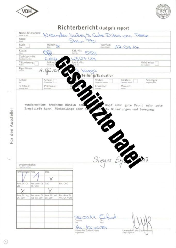 Richter Bericht Erfurt VDH-Rassehundegemeinschaftsausstellung