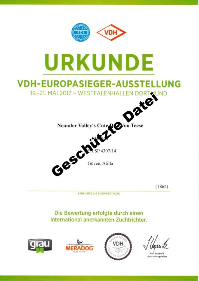 Urkunde Dortmund VDH-Europa-Ausstellung