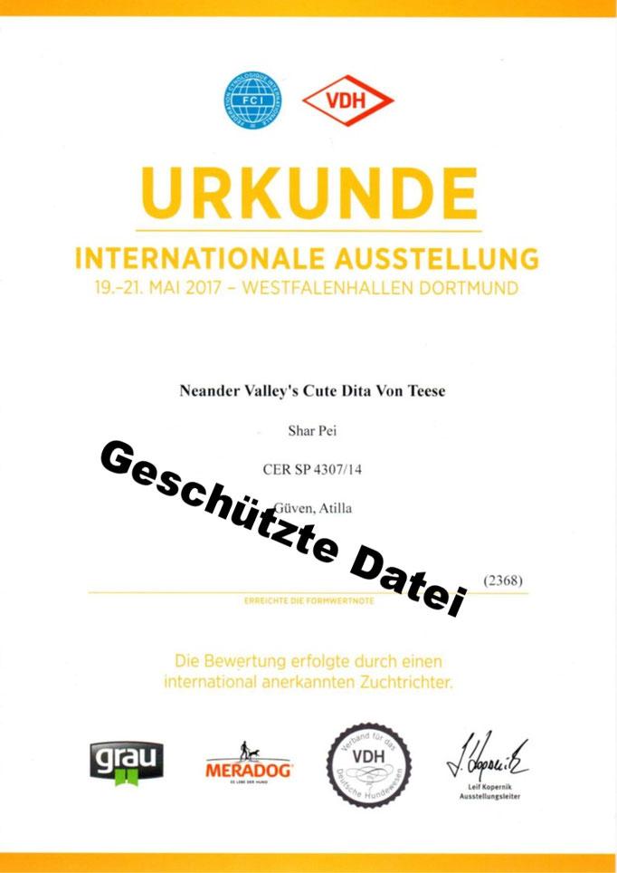 Urkunde Dortmund VDH-Internationale-Ausstellung