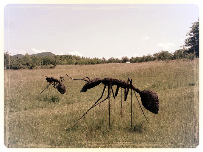 Deev Vanorbeek, artdeev     fourmis metal art sculpture 100 x 150 x 200 cm          www.vanorbeek.com                                                                     fil de fer , metal art,  sculpture d'insecte, recyclage