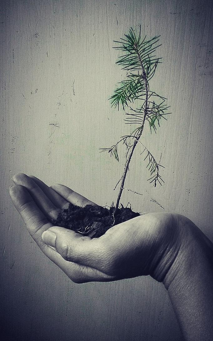 Day 17, Tree