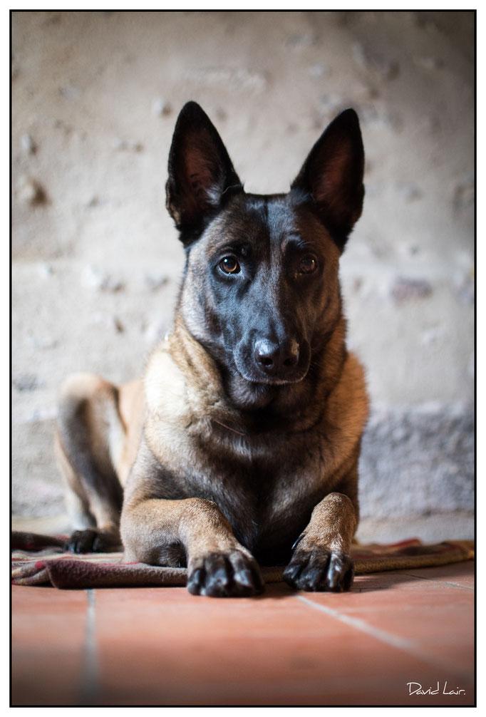 Un chien star. Par David Lair Photographe à Ancenis.