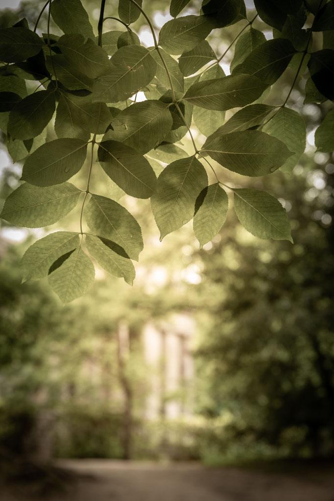 © Sibylle Pietrek 2019_Sacro Bosco-Bormarzo-Italien_190529_2348