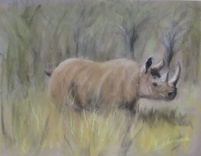 « Rhino jungle»  : Pastel - format 30x40 cm – 105€