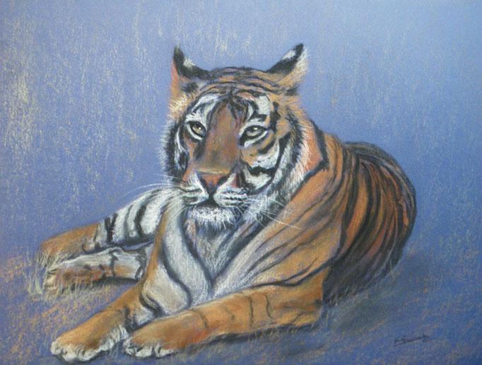 « Tigre au repos2 » : Pastel - format 24x32 cm
