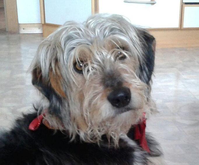 Alto Adige  -  Terrier-Mix trova nuova casa