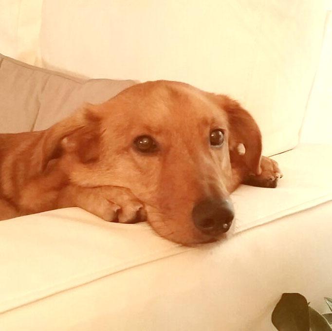 Alto Adige  -  Cane meticcio maschio trova nuova casa