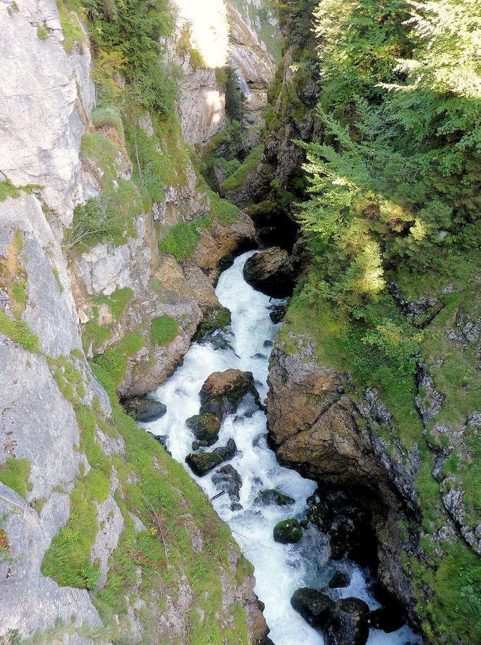 Der Waldbach kurz vor den drei Seilstufen