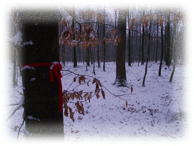 FriedWald Bremervörde, An der Höhne, Im Winter, www.oste-town.de