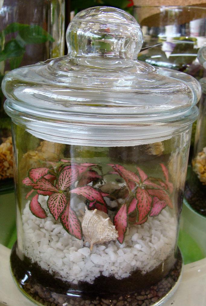 Terrarium de plantes avec bouchon en verre