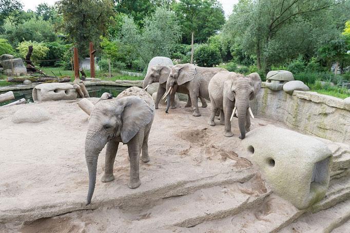 Elefantenanlage Tembea 4