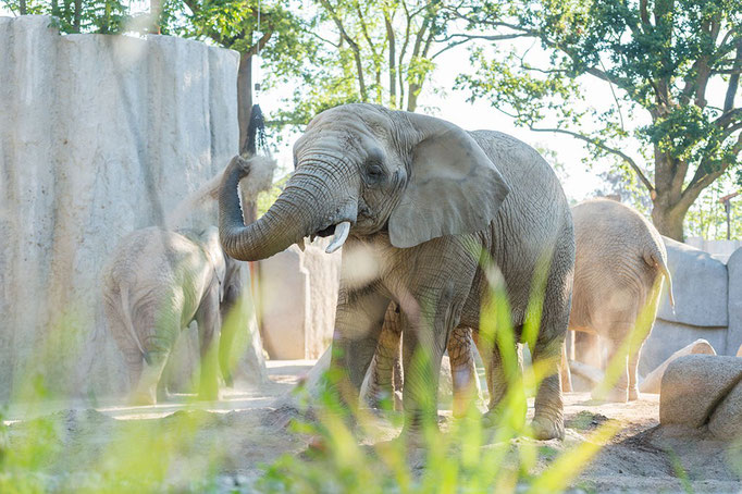 Elefantenanlage Tembea 7
