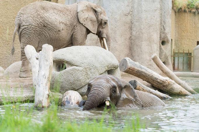 Elefantenanlage Tembea 5