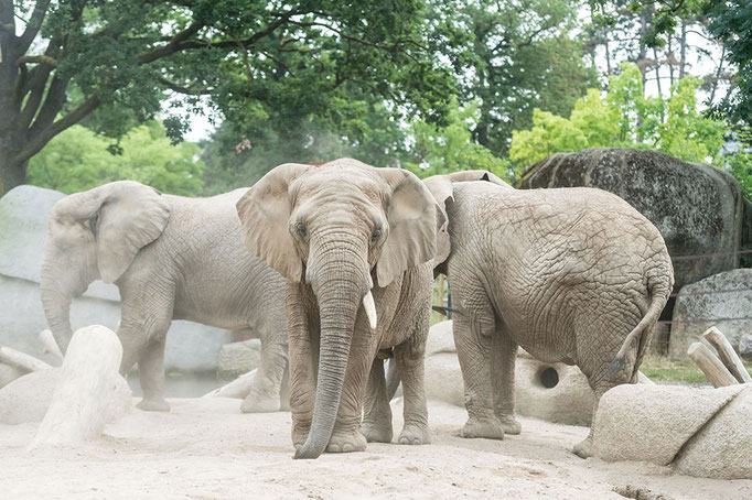 Elefantenanlage Tembea 3
