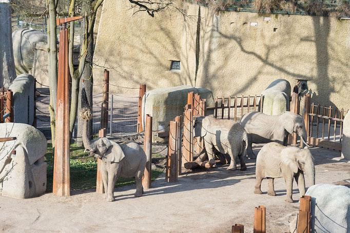 Elefantenanlage Tembea 6