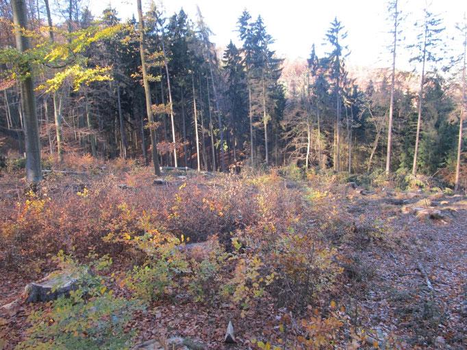An der Hütte Waldfrieden