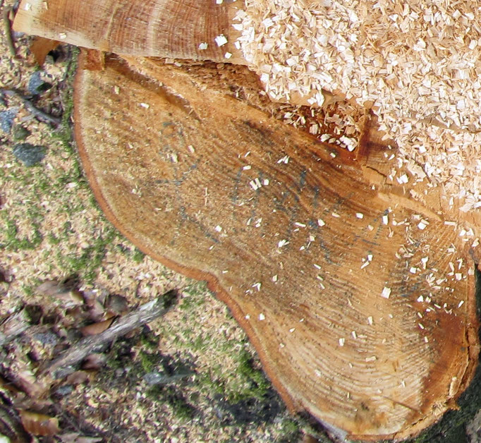 bekritzelter Baumstumpf mit Nachricht an uns