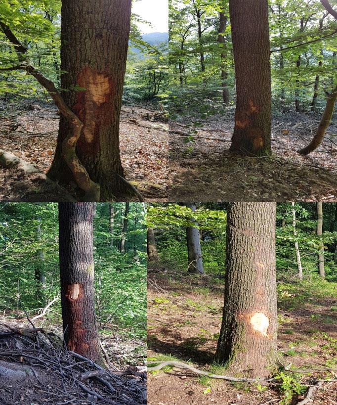 Exempel Baumverletzungen