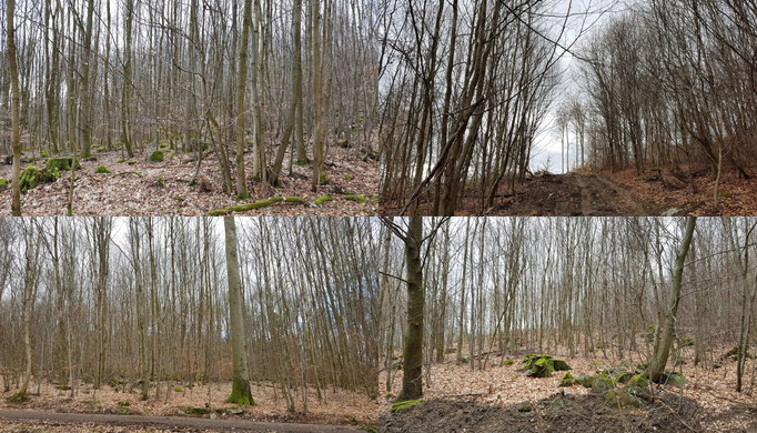 Exempel Stangenholz