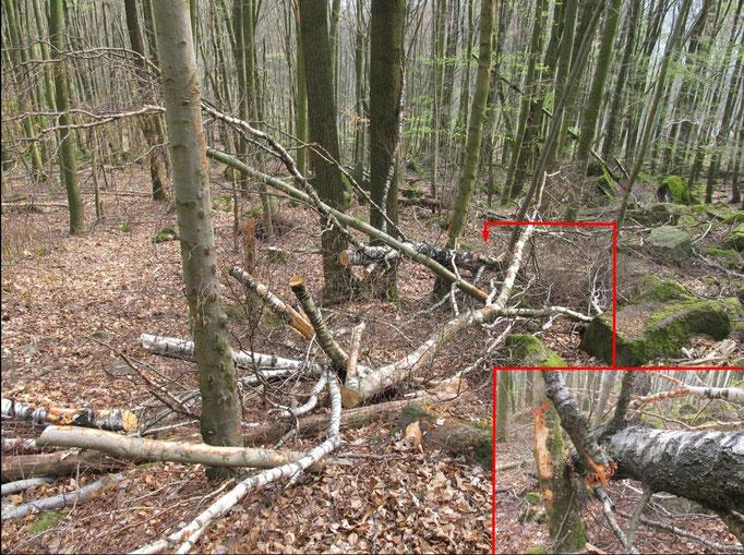 Exempel Baumzerstörung Laubbäume