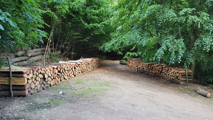 Brennholz aus Eichen