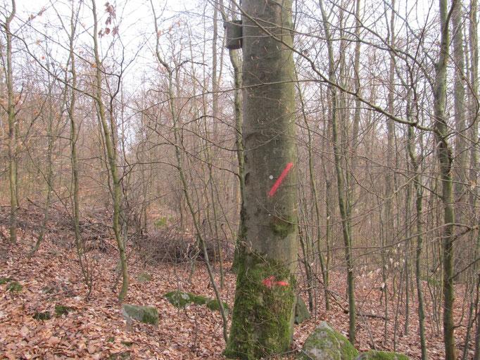 Exempel Fällmarkierung am Baum mit Nistkasten