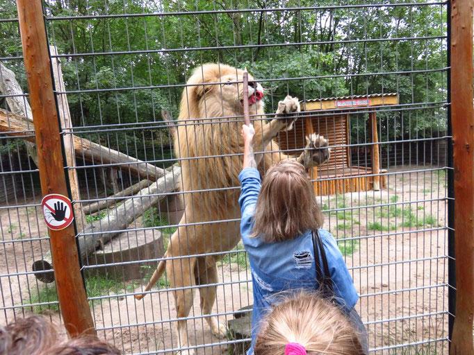 ....und dem schielendem Löwen