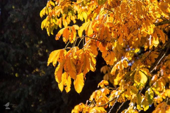 Herbst im botanischen Garten der Universität Mainz