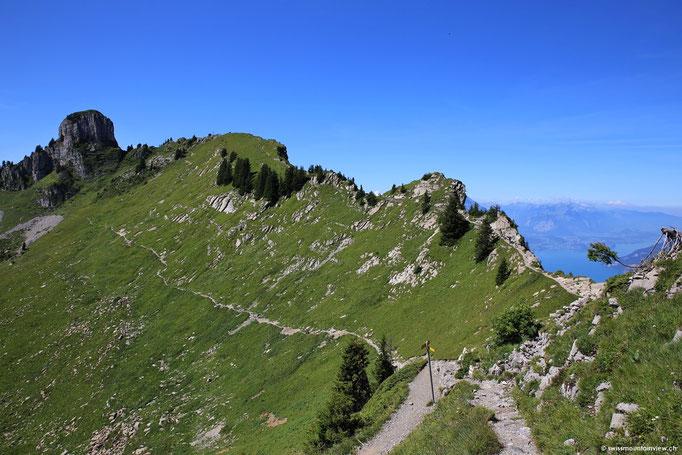 Links geht's Richtung Daube - zurück auf die Schynige Platte und rechts führt die Wanderung entweder hinauf aufs Oberberghorn oder ums Horn herum Richtung Faulhorn - First.