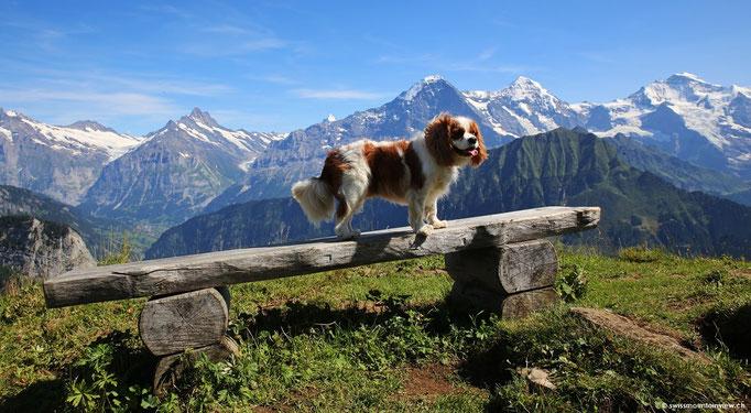 Charly, unser Cavalier King Charles Spaniel geniesst die Wanderung und die Aussicht.