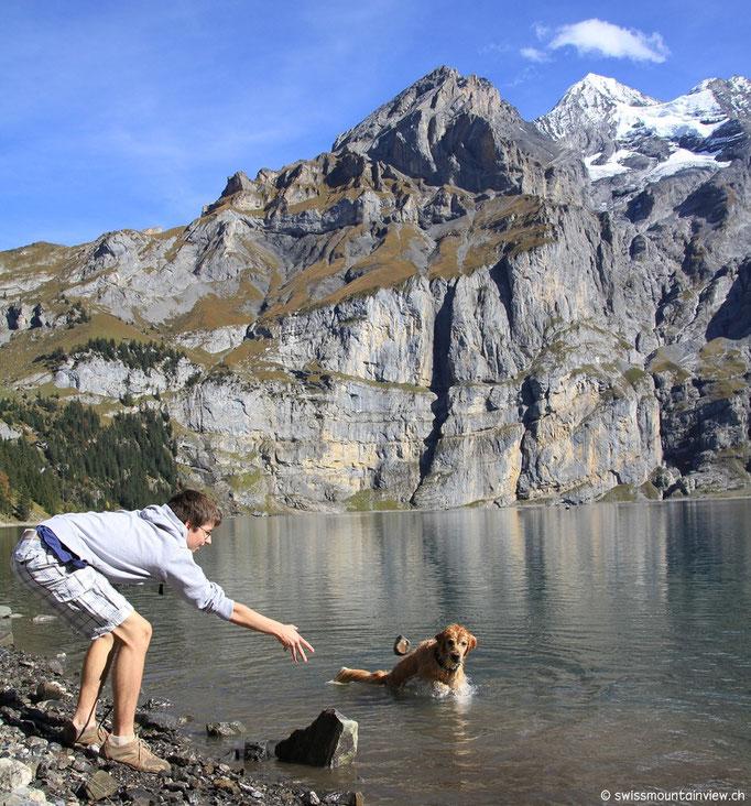 Roxy liebt das Wasser - Golden Retriever, what else ;)