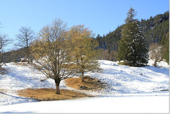 und vielerorts liegt das Laub in grossen Kreisen unter den Baumkronen.