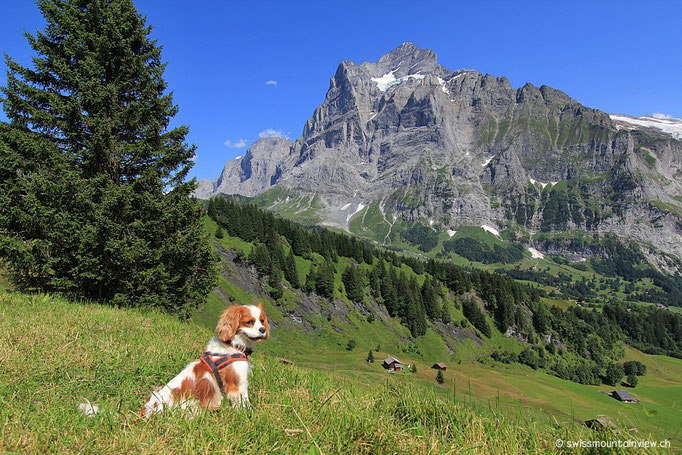 Charly schaut zum letzten Mal ins Tal und dann geh'ts ab in die Gondel