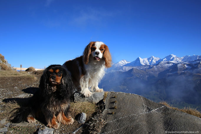 ... und der goodies stairway to heaven - jenes meiner doggies :)