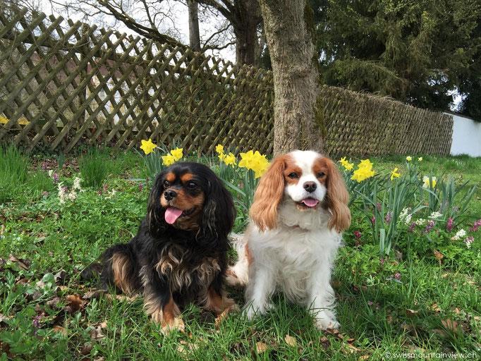 Jucy & Charly beim Schloss Salem