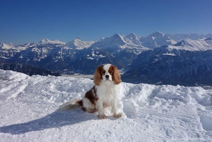 Niederhorn Blick Richtung Eiger, Mönch und Jungfrau