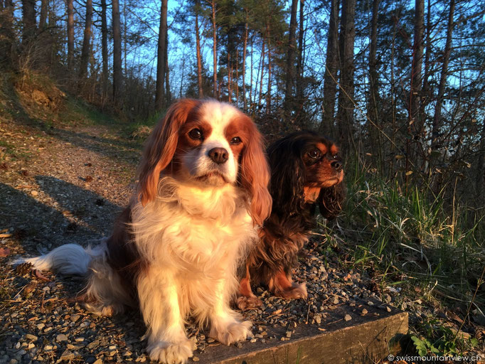 Jucy & Charly am Schlosssee