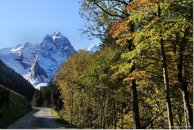 Traumhaft, der Blick auf die schneebedeckten Berge, gesäumt von den herbstlichen Bäumen.