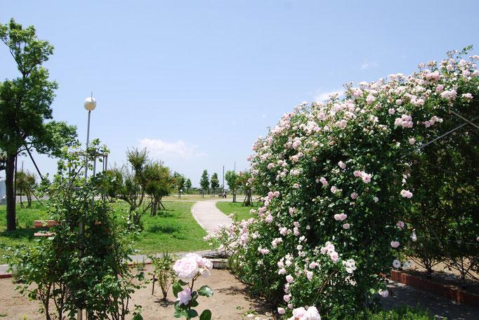 季節の花が花壇いっぱいに植えられています。花の香りが風に運ばれ、心とからだをリフレッシュしてくれます。